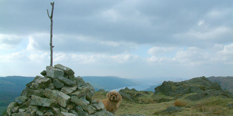 George and Coniston Water from Holme Fell