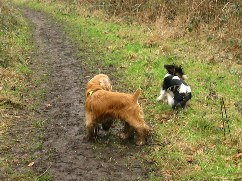 Dogs on London Loop path
