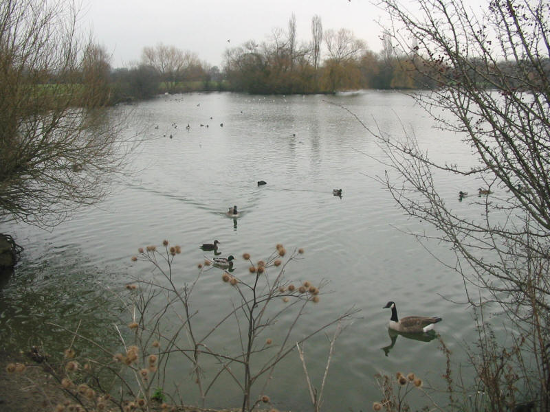 lake formed from gravel pit near M11 on London Loop