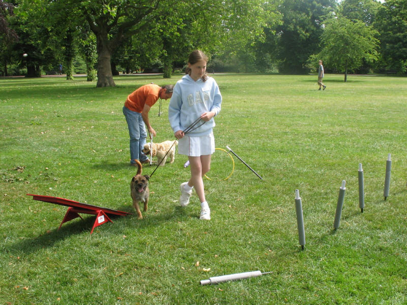 dog agility in Greenwich Park, London