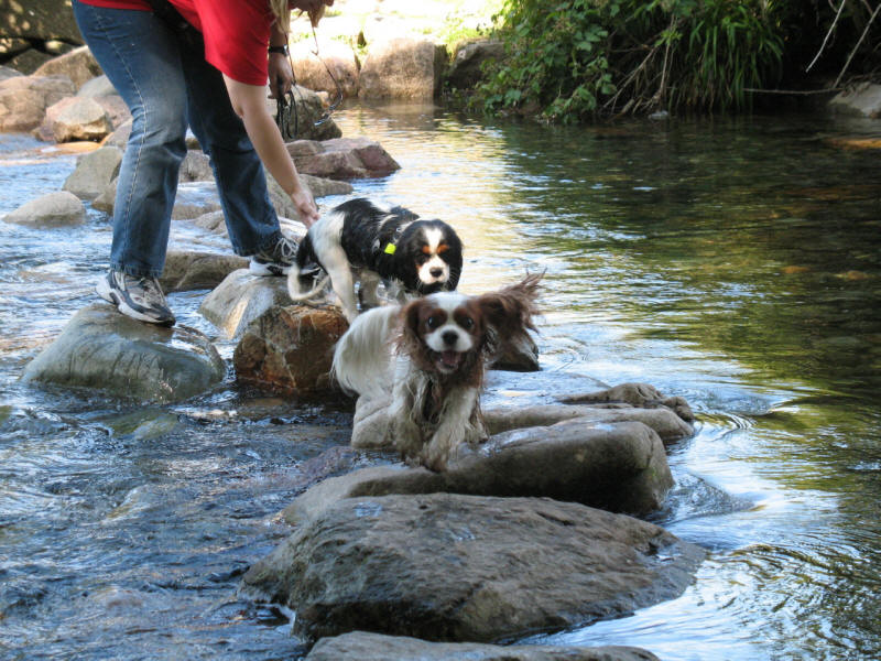 Dogs on stepping stones
