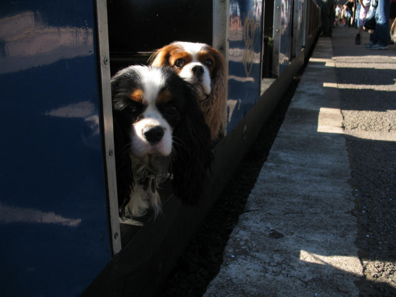 Dogs on Ravenglass and Eskdale Railway