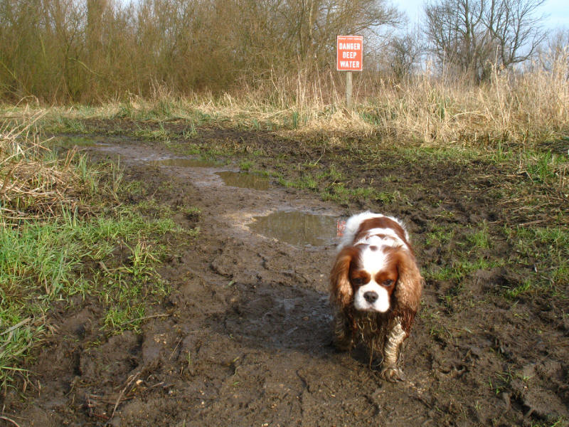 Henry on a muddy Thames Path near Shiplake