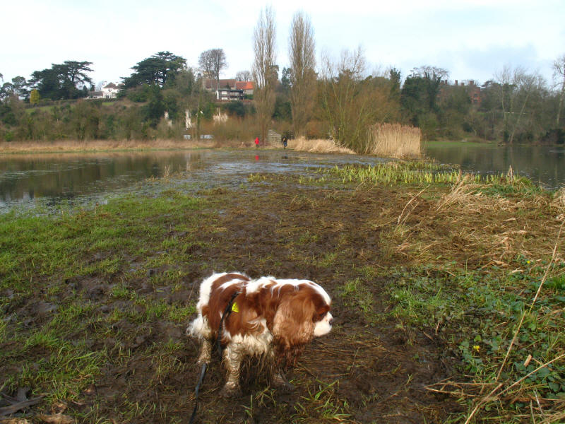 Flooded Thames Path near Shiplake