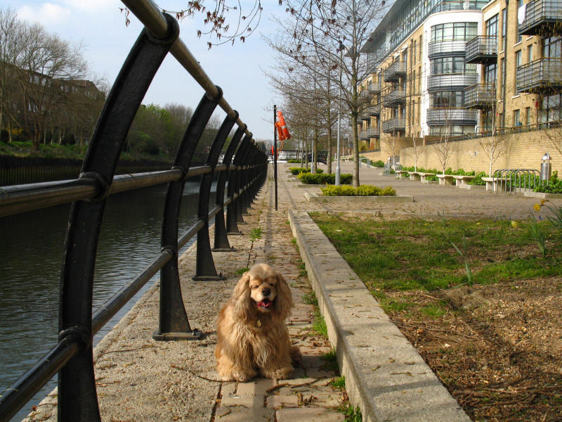 George by entrance to Grand Union Canal
