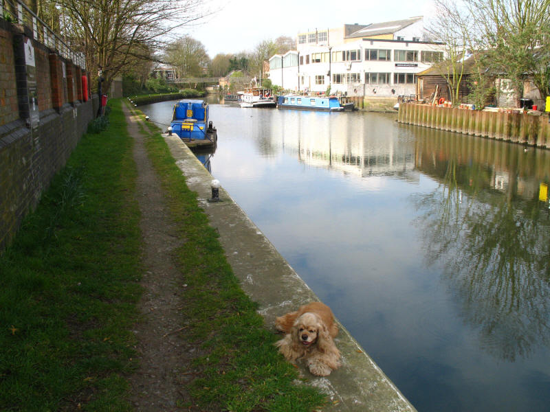 Grand Union Canal and River Brent above Thames Lock