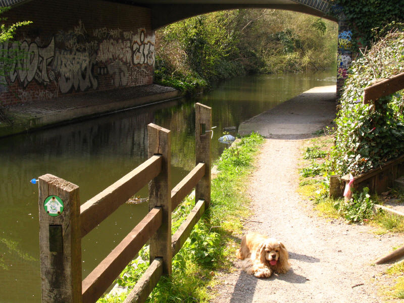 Grand Union Canal Walk and London Loop together