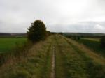 The Devil's Dyke near Newmarket