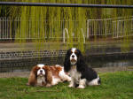 Dogs by the Grand Union Canal at Rickmansworth
