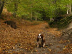 Henry in Bramfield Woods in Hertfordshire