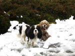 Ellie and George in the remnants of snow during a walk to the top of the Long Mynd