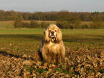 George during a slightly muddy Hertfordshire Chain Walk from Bramfield to Watton at Stone.