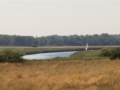 a glimpse of a sail on the River Waveney