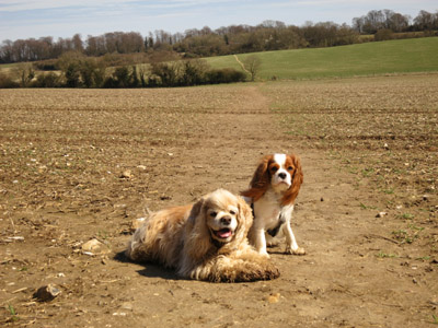 George and Lottie on the North Downs Way Canterbury Loop