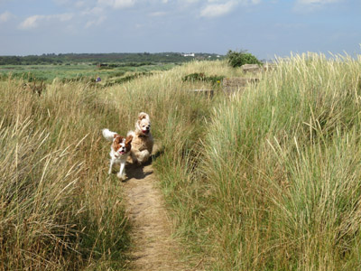 Happy dogs by the sea at Minsmere