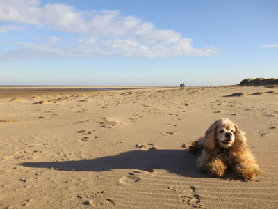 George on the beach at Holkham Bay on the north Norfolk coast