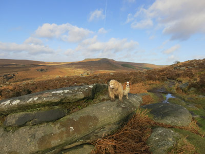 George, Lottie and Hathersage Moor in the Peak District
